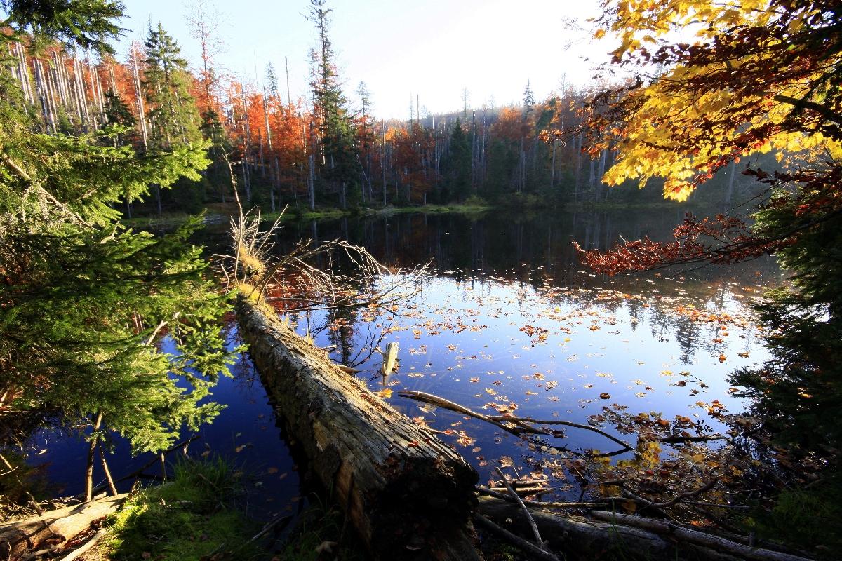 Nationalpark Bayerischer Wald.
